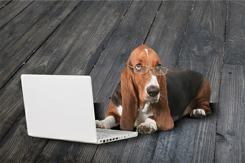 Can an old dog learn new technologies?