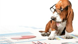 What can a data dawg teach you about predictive analytics?